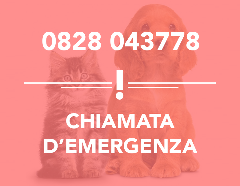 intervento-24-home-chiamata-d'emergenza-pronto-intervento-veterinario-battipaglia-creatiwa-studio